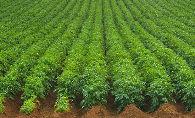 Agricultural research papers - Quality Academic Writing