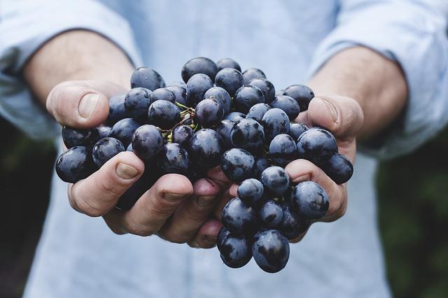 Grapes-690230_6401.jpg