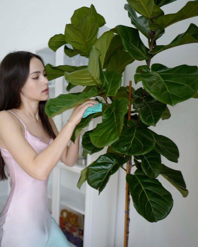 ปลูกต้นไม้ตามญาญ่า
