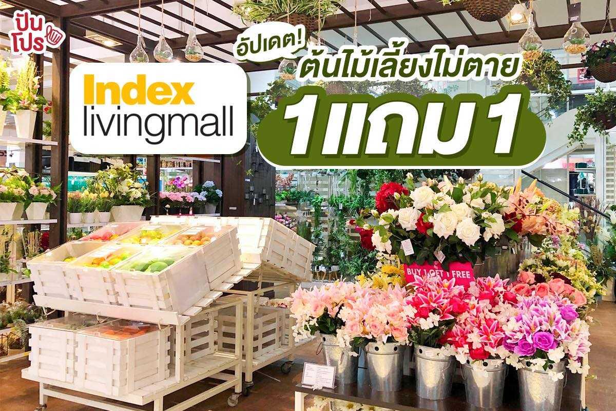 Index Living Mall ให้ห้องเป็นสีเขียวไสว! รวมต้นไม้หลากชนิด ซื้อ 1 แถม 1