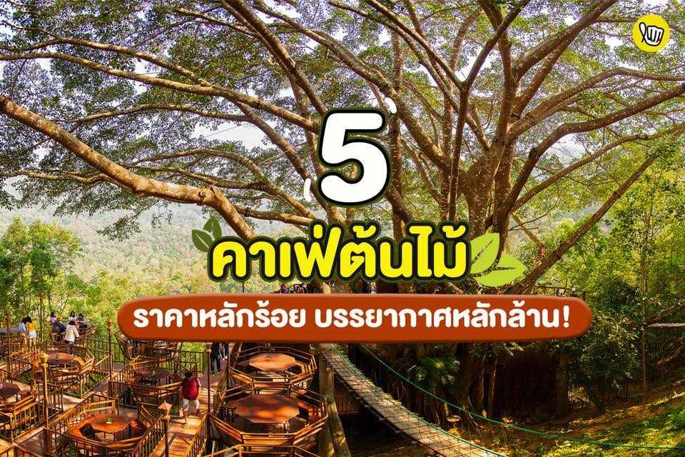 5 คาเฟ่ต้นไม้ ราคาหลักร้อย บรรยากาศหลักล้าน!!