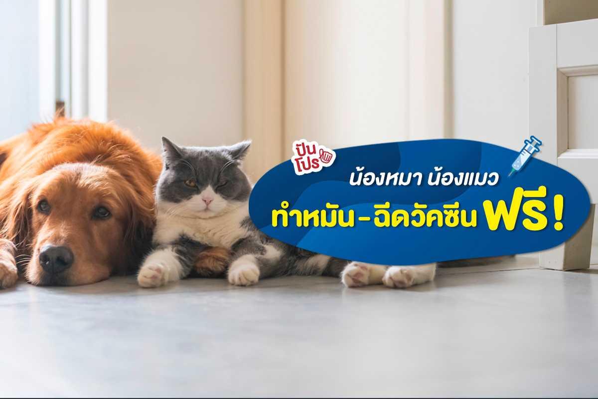 ตรวจฟรี! สุขภาพน้องหมา-แมว ฉีดวัคซีน ทำหมัน 9 วันทั่วประเทศ