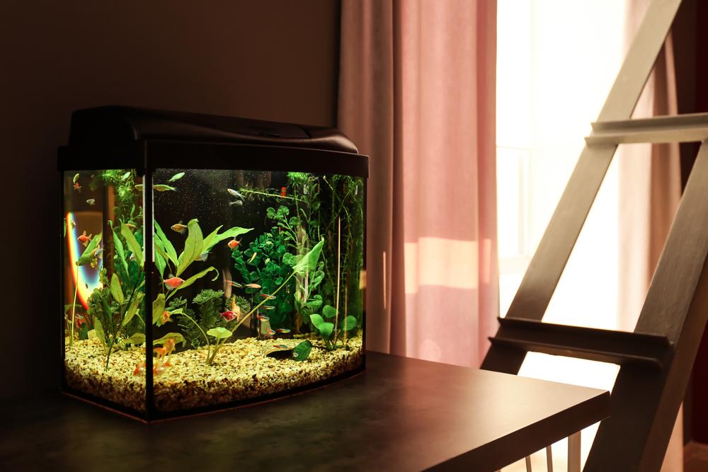 Yuk Pelihara Ikan Cantik Di Rumah Begini Cara Membuat Akuarium Dari Kaca Dan Akrilik Artikel Spacestock