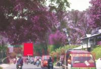 sewa media Billboard Baliho BDLIBBL03 - B, Jalan Imam Bonjol - Kota Bandar Lampung KOTA BANDAR LAMPUNG Street
