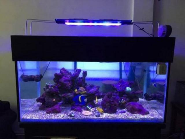 Used large fish tanks for sale in Cambodia - 1/3