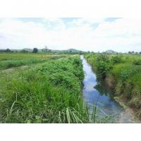 Agriculture Land 80 ha For Sale