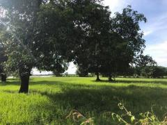 Land for sale kandal province - Image 3/8