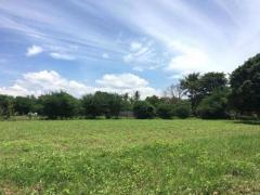 Land for sale kandal province - Image 6/8