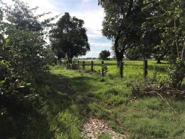 Land for sale kandal province - 8/8