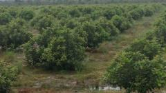 ដី និង ចំការសំរាប់លក់ (ចន្ទី) | Land and Farm for sale