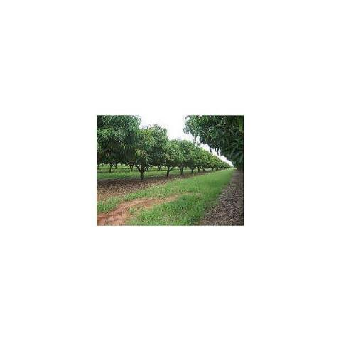 Agriculture Land 80 ha For Sale - 1/1