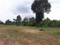 ដីល្អសំរាប់ធ្វើចម្ការ | Good land for planting