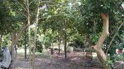 ขายที่ดินสวนผลไม้ โซนตาขัน สามารถเก็บผลผลิตได้ ทำเลดีอยู่ในแหล่งชุมชน เดินทางสะดวก บ้านค่าย ระยอง