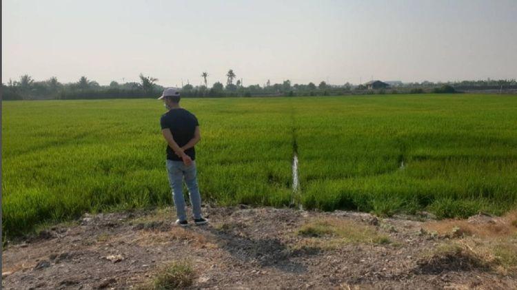 ขายที่ดินบางเลนใกล้วัดไผ่โรงวัวไร่ละไม่ถึงล้านจำนวน 9 ไร่ 2 งาน 89.8 ตร.วา, ภาพที่ 2