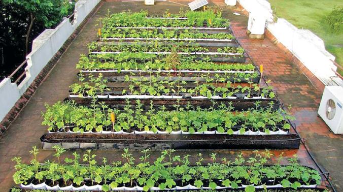 Farming for the urbanista for Terrace farming model