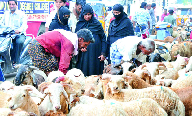 for festival: Many goats were put on sale at a marketplace in the city on Wednesday ahead of the Bakrid festival that starts on Friday. (Photo: DC)