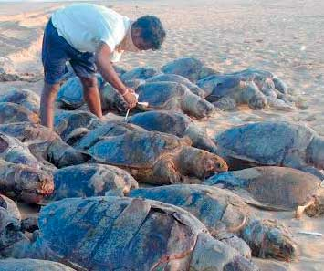 Turtle found dead on the coast