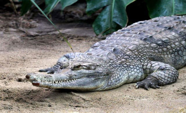 The anti-drugs chief will visit various parts of the archipelago in his search for fierce reptiles to guard the jail (Photo: AFP)