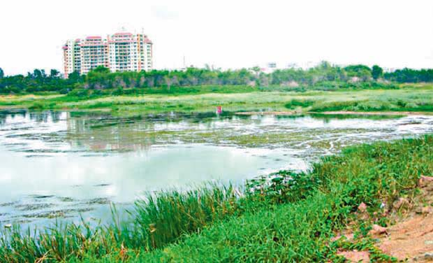 A view of the Bellandur Lake on the outskirts of Bengaluru (Photo: DC)