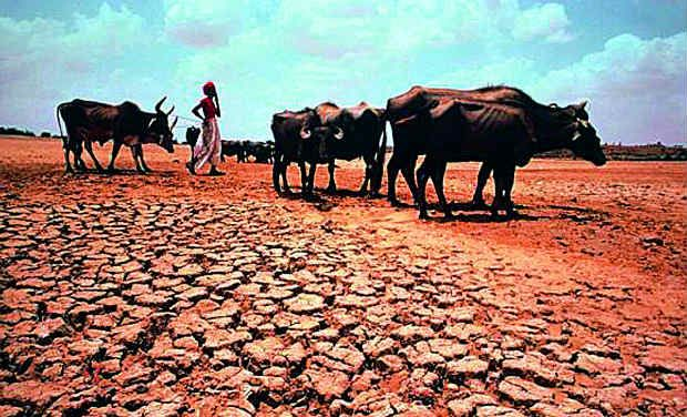 drought and livelihoods