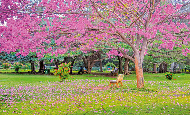 Image result for cubbon Park