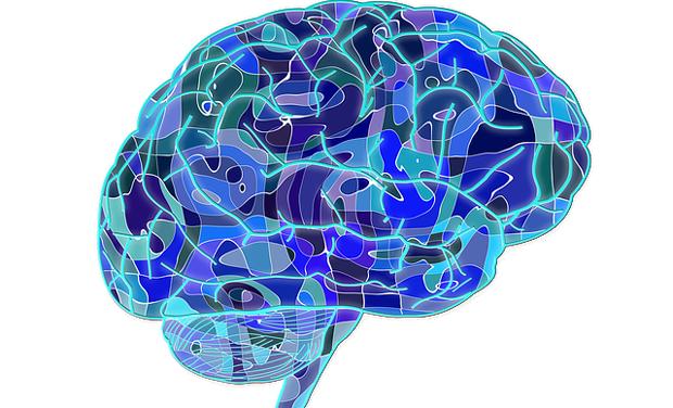 Childhood Concussions Impair Brain >> How Childhood Concussions Affect Brain Reveals Study