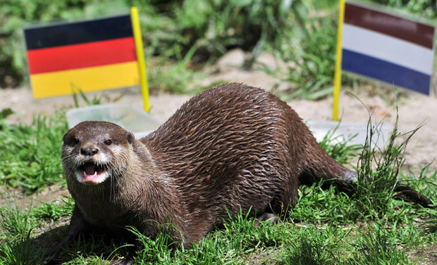 Psychic animals make their World Cup predictions