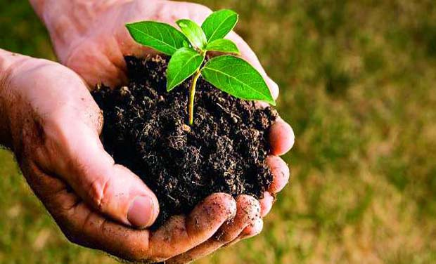 Minister Peethala Sujatha advises people to gift saplings instead of chocolates and biscuits during birthday celebrations.