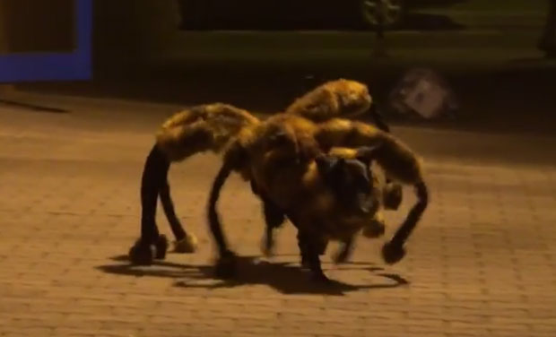 Polish prankster Sylwester Wardega terrified unlucky people who happened to cross paths with his adorable dog dressed in a giant mutant spider costume. (Photo: Video grabs)