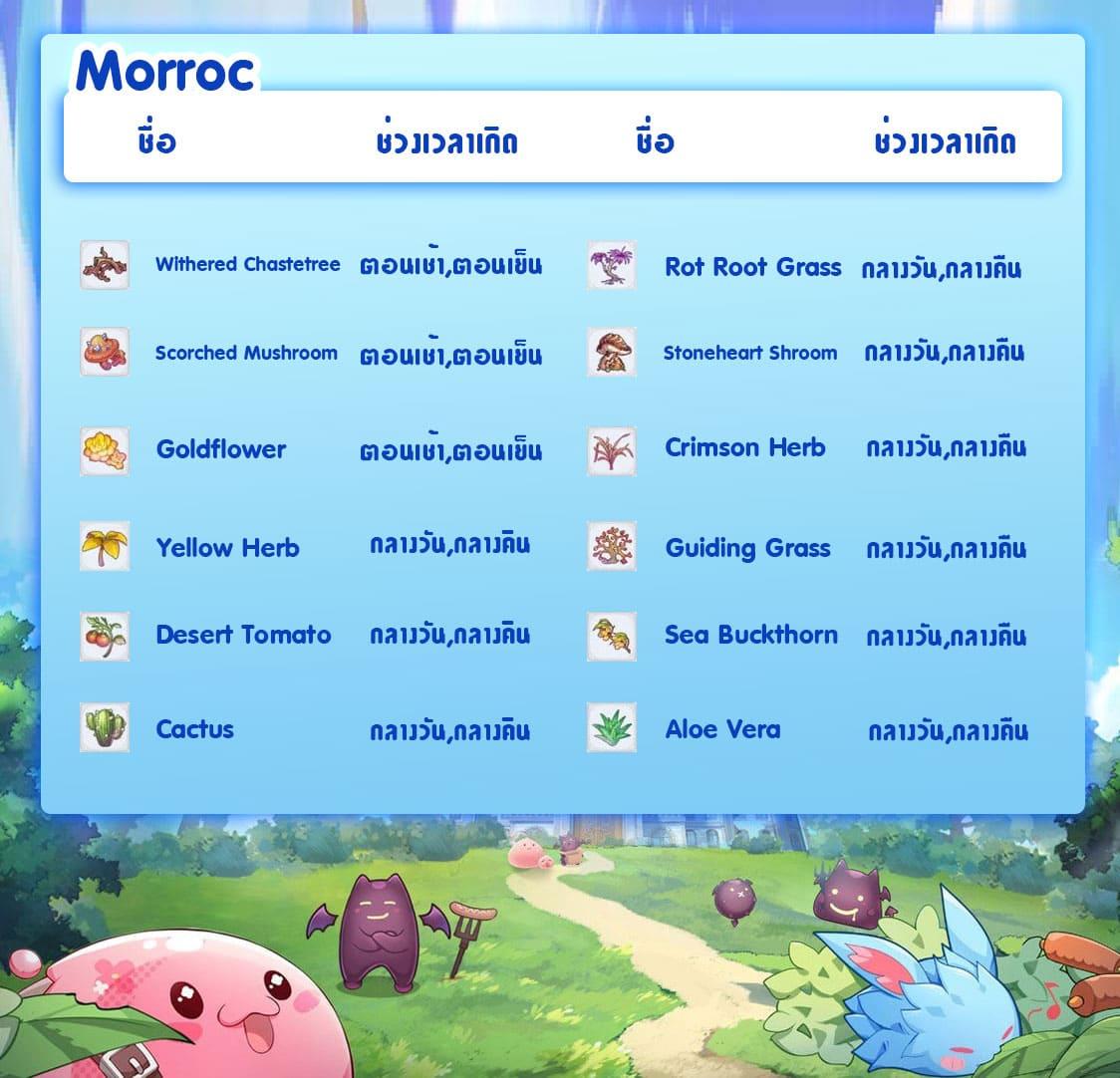 ROX Gardening - location Morroc