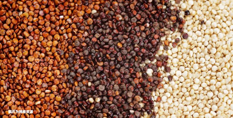 Blog - Quinoa-05.png