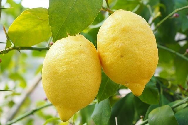 冷壓檸檬精油.jpeg