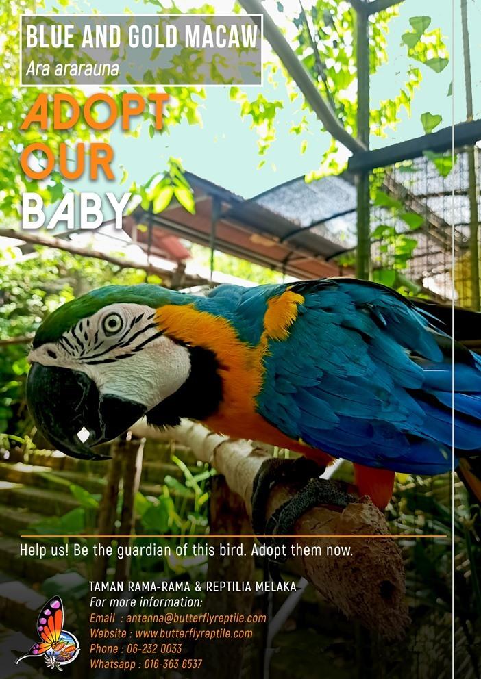 Blue and Gold Macaw i.jpg