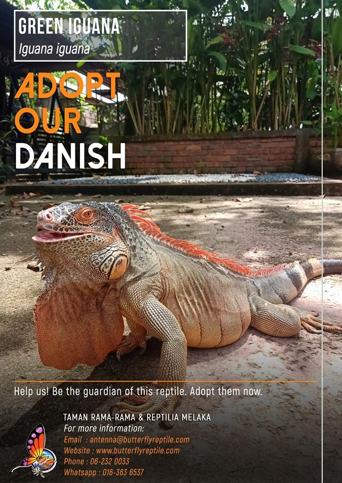 Iguana i.jpg