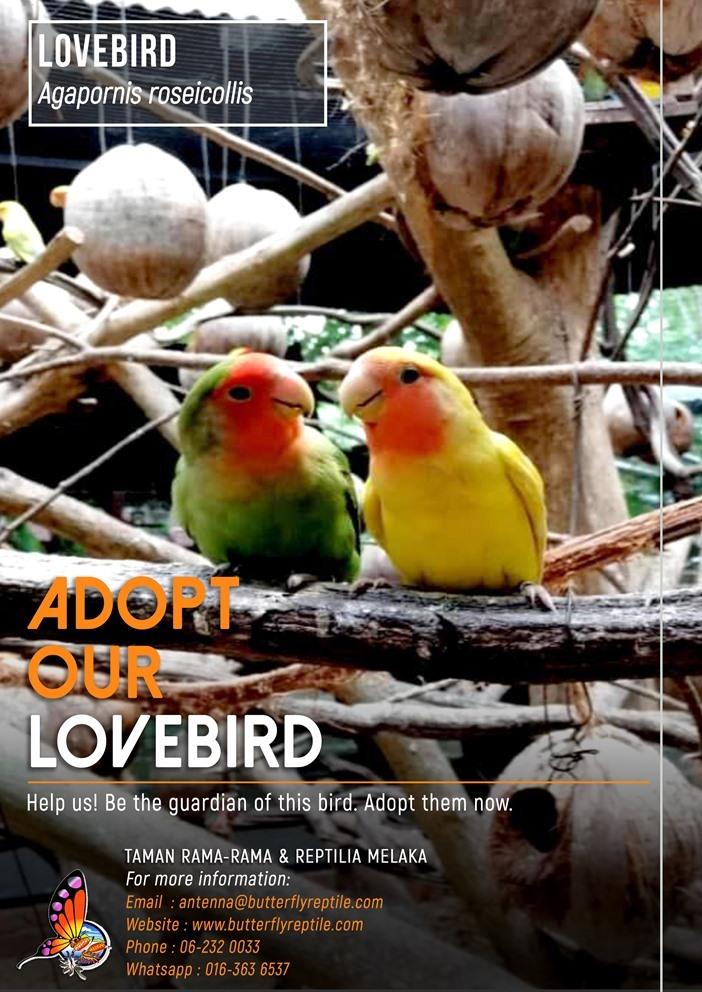 Lovebird i.jpg