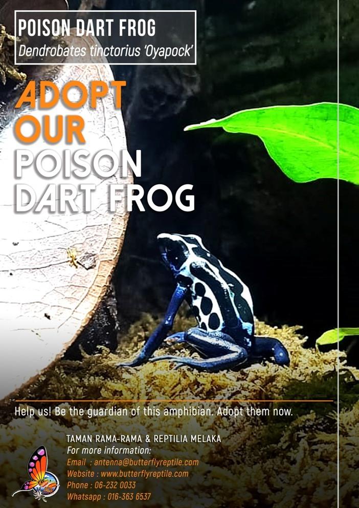 Poison Dart Frog (1) i.jpg