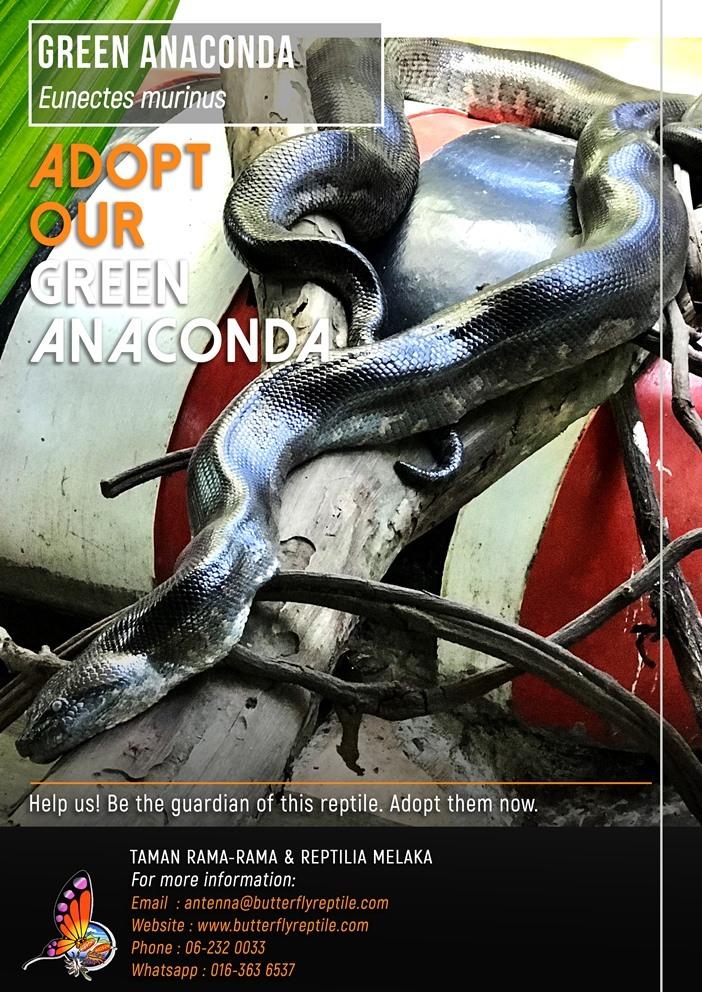 Green Anaconda i.jpg