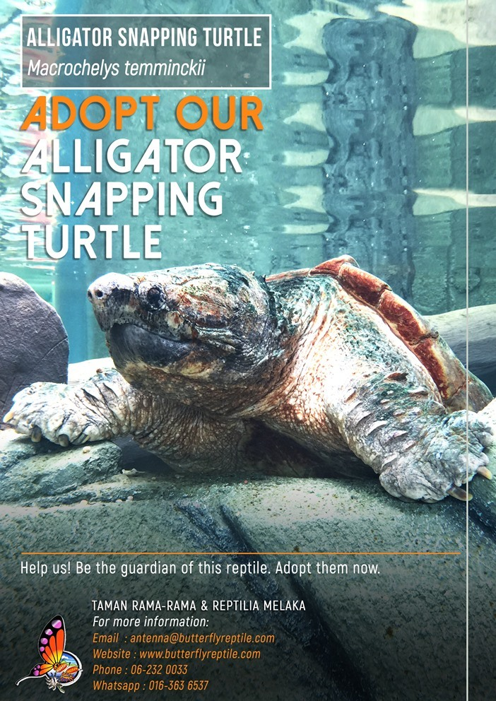 Alligator Snapping Turtle i.jpg