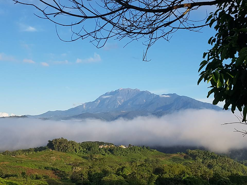 Mount kinabalu from Sabah tea.jpg