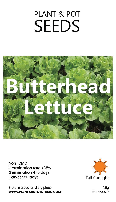 Butterhead Lettuce.jpg