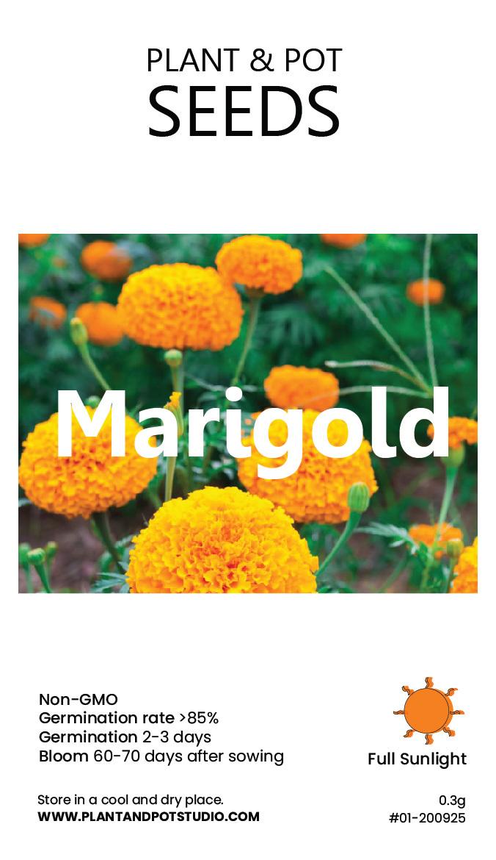 Marigold-01.jpg
