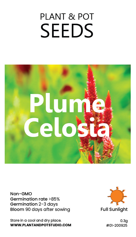 Plume Celosia-01.jpg