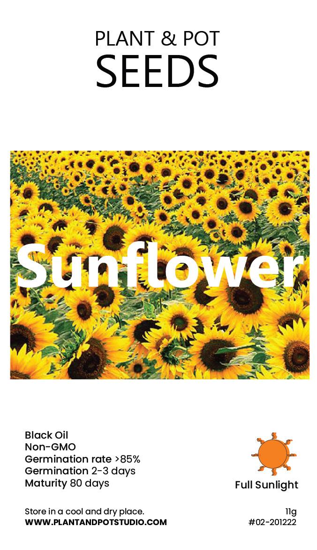 Sunflower-01.jpg