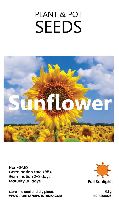Sunflower2-01.jpg