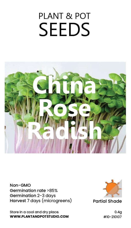 China Rose Radish-01.jpg