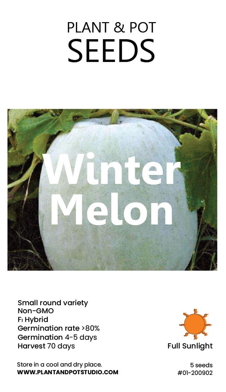 Winter Melon-01.jpg