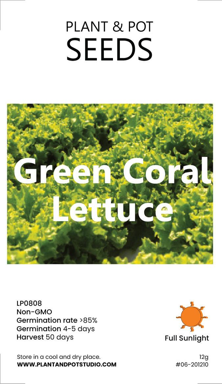 Green-Coral-Lettuce-01.jpg