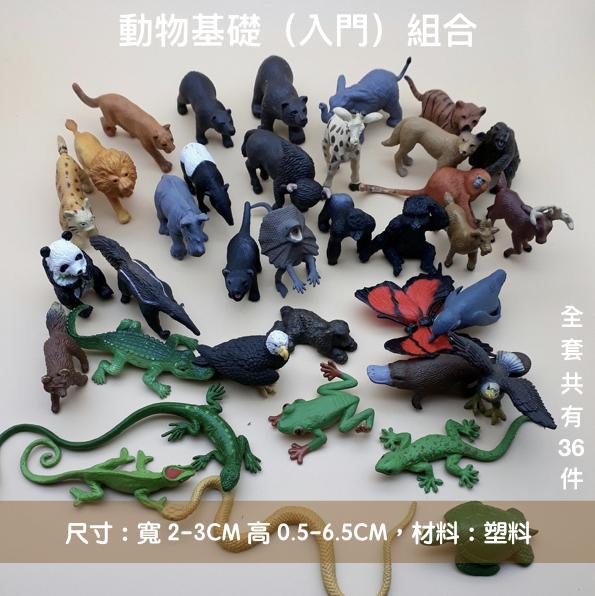 動物基礎入門組合36件.jpg