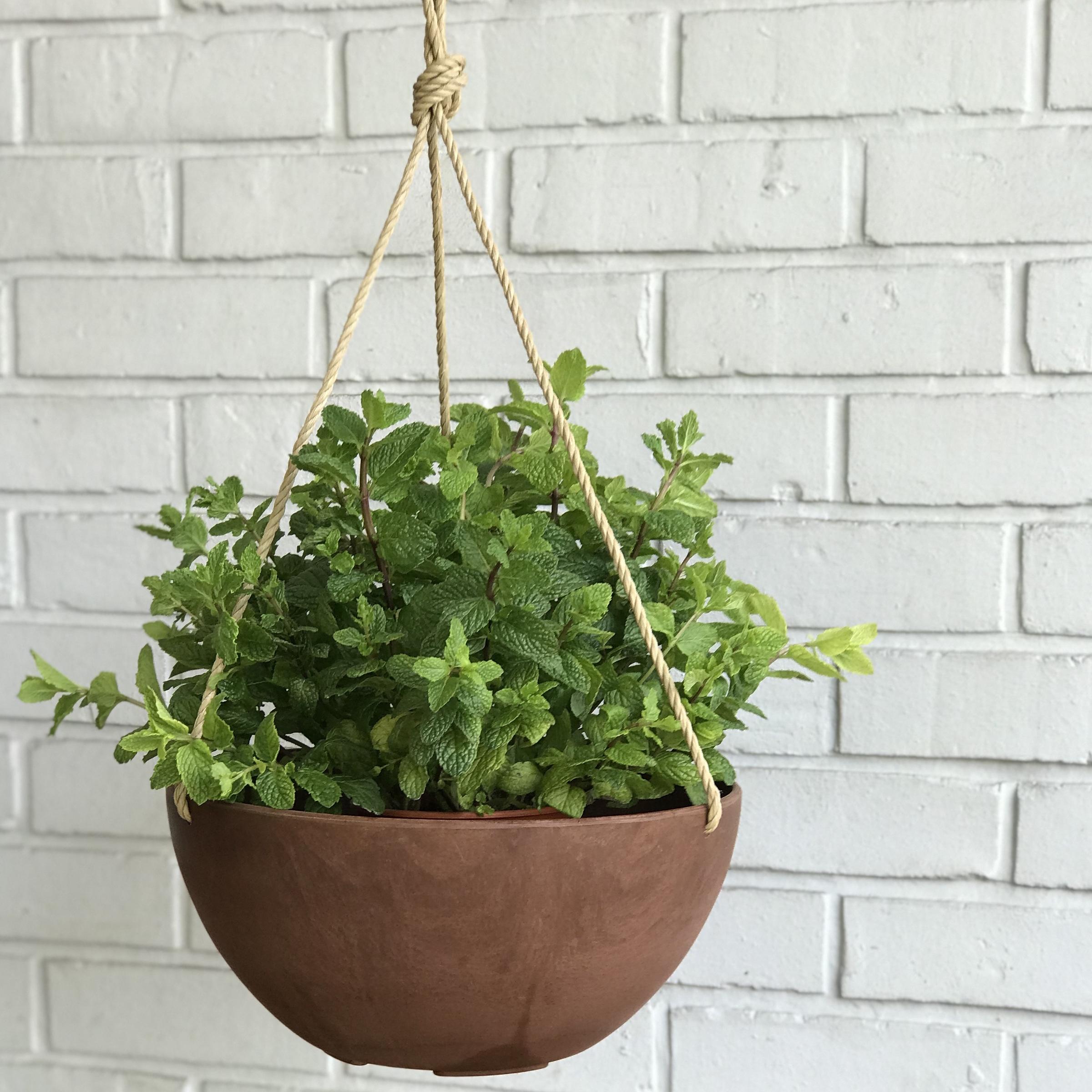 Hanging Planter - Bronze M with Plants 3754.jpg
