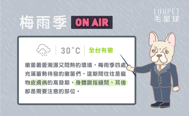 寵物梅雨季-03-2.jpg